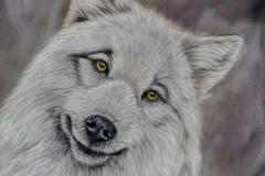 DSC_2757small-wolf-2