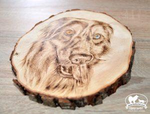 Tierportrait gebrannt auf Baumstamm