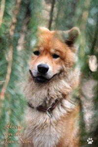 Alwin im Wald
