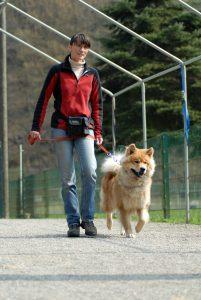 Alwin Hundeschule