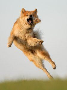 Alwin springt